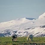 Iceland Aurora Photo Tours - Day Toursの写真