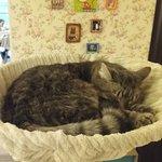 Valokuva: Cat Cafe Kačių Kavinė