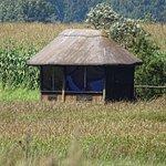 Φωτογραφία: Karkloof Conservation Centre