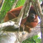 Photo of Amazon Wildlife Peru