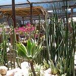 Photo of Cactus Coffee & Teagarden