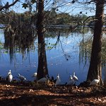 Billede af Secret Lake Park