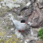 Foto de Farne Islands