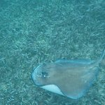 Photo of Shark Ray Alley
