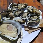 Giant oyster (AUD 8 each)