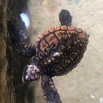 Sea Turtle Farm and Hatchery照片