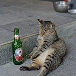 Foto de Fat Cats Bar & Restaurant