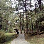 path along trail