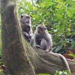 Φωτογραφία: Bali Adventours