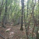 Photo de Parco Naturale del Sasso Simone e Simoncello