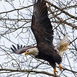 Leaving For Hunting! Canon 7D Mark II Tamron 150-600mm f/5-6.3 lens Hand held on monopod