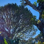 WOODSVILLE - Kailas Plantations Photo