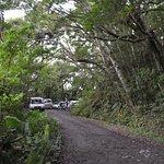 صورة فوتوغرافية لـ Kinsakubaru Forest