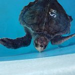 Loggerhead Marinelife Center Foto