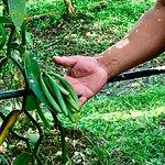 Belize Spice Farm & Botanical Garden의 사진