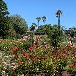 Parnell Rose Gardens Foto