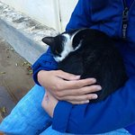 The monastery's cats are super friendly