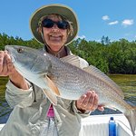 Redfish from Pine Island Sound
