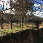 Foto de Windsor Castle Park