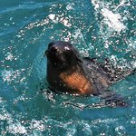 Wildlife Coast Cruisesの写真
