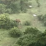 Wild Elephant as seen from above