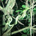 Ficus Trails-billede
