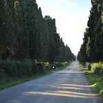 Ảnh về Viale dei Cipressi