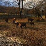 Topolcianky Bison Park – fotografia