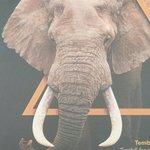 Foto van AfricaMuseum