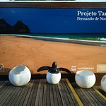 Foto de Projeto Tamar