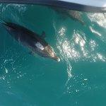 Φωτογραφία: Dolphin Seafaris