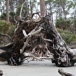 Photo of Hunting Island State Park