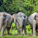 Photo of Phuket Elephant Sanctuary