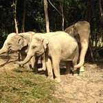 Elephants in their environment