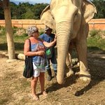 elephants with visitors