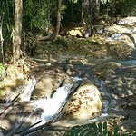 Photo of Kuang Si Falls Butterfly Park