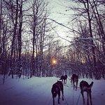 תמונה מNorth Ridge Ranch - Dog Sledding