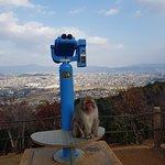 嵐山岩田山猴子公園照片
