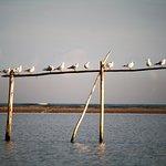 Foto van Escursioni in Barca nel Delta del Po - Alberto Barini