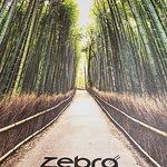 Fotografie: Zebra Express