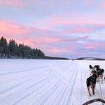 Dog sledding in Kiruna