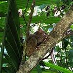眼鏡猴保護區照片