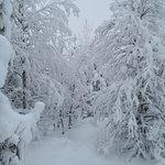 Valokuva: Wolverine Fell Wilderness and Nature