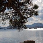 Photo of Pine Walk