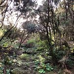 Garajonay National Park صورة