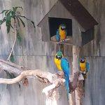 Photo of Bird Kingdom
