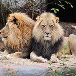 ภาพถ่ายของ Zoo Atlanta