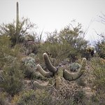 Фотография Tucson Mountain Park