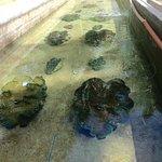 Giant Clam Sanctuary Foto