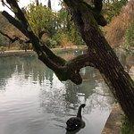 Фотография Парк с лебедями